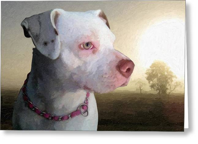 Staffordshire Bull Terrier Greeting Cards - In Thought Greeting Card by Michael Tompsett
