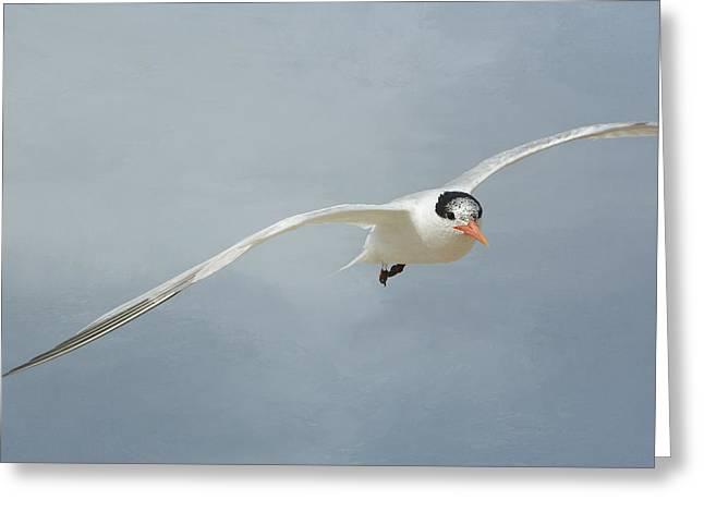 Tern Greeting Cards - Inbound Greeting Card by Fraida Gutovich