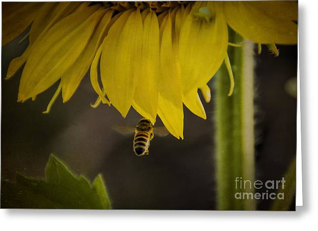 Flying Animal Greeting Cards - Incoming Bumblebee Greeting Card by Janice Rae Pariza