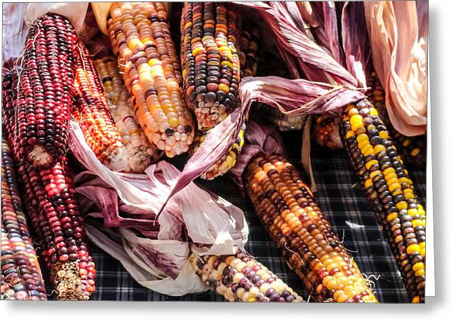 ist Photographs Greeting Cards - Indian Corn 02 Greeting Card by Cynthia Woods