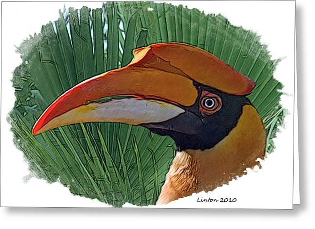 Indian Hornbill Greeting Card by Larry Linton
