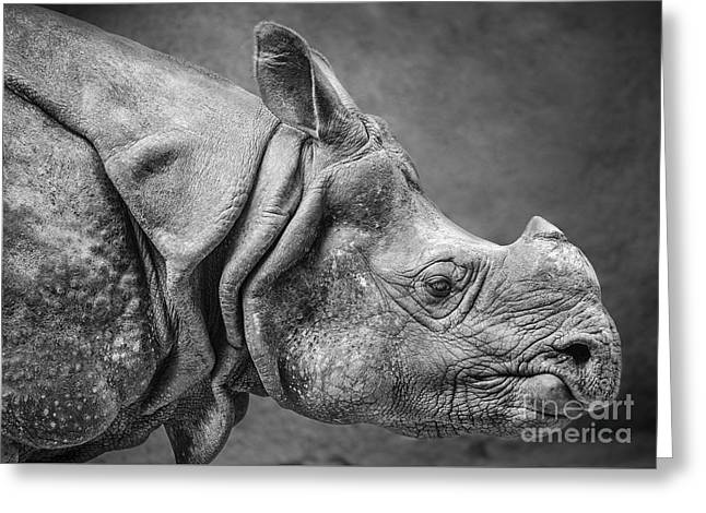 One Horned Rhino Greeting Cards - Indian Rhino Profile Greeting Card by Jamie Pham
