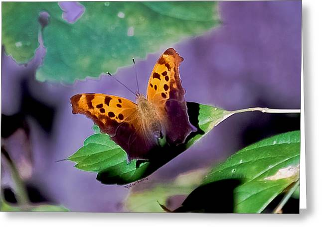 Question Mark Greeting Cards - Indiana Angel Wing Greeting Card by DigiArt Diaries by Vicky B Fuller