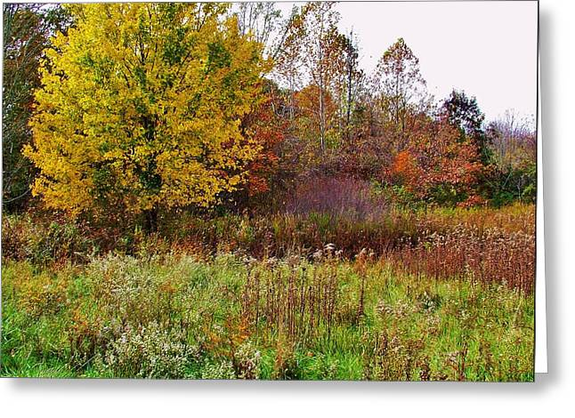 Indiana Autumn Greeting Cards - Indiana Autumn    Potato Creek State Park Greeting Card by Rory Cubel