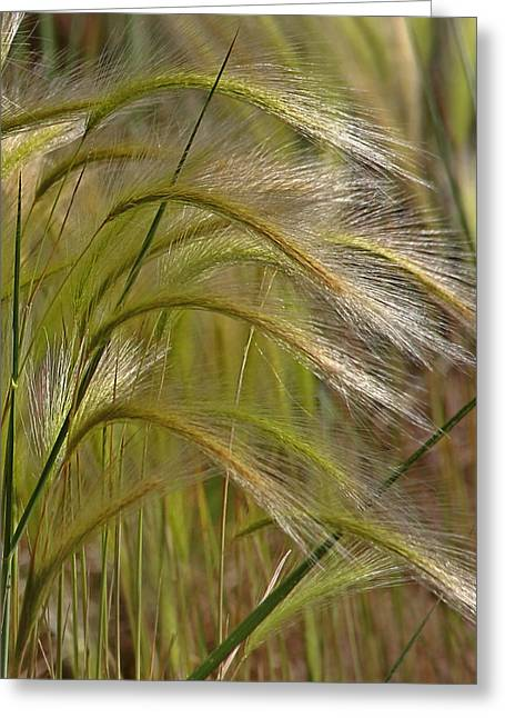 Grasses Greeting Cards - Indiangrass Swaying Softly with the Wind Greeting Card by Christine Till