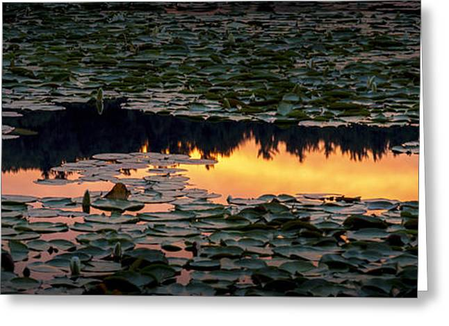 Pond Greeting Cards - Inferno Greeting Card by Victor Ellison