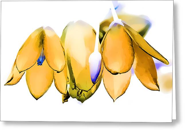Digital Art Greeting Cards - Inflorescence I Greeting Card by Gareth Davies