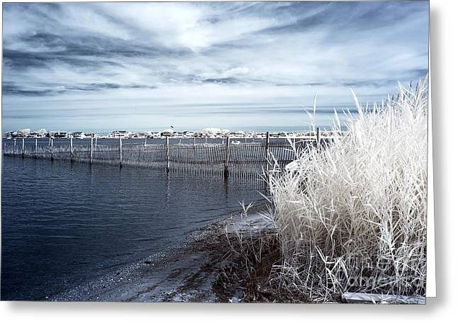 Infrared Photography Greeting Cards - Infrared Bay View Greeting Card by John Rizzuto