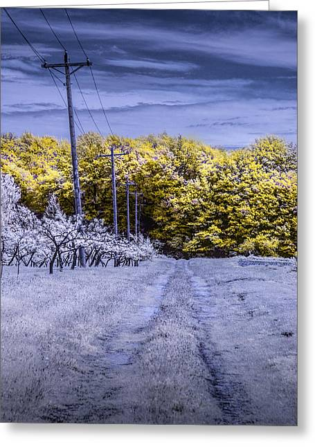 Fruit Tree Art Greeting Cards - Infrared Orchard Road Landscape in Blue and Yellow Greeting Card by Randall Nyhof