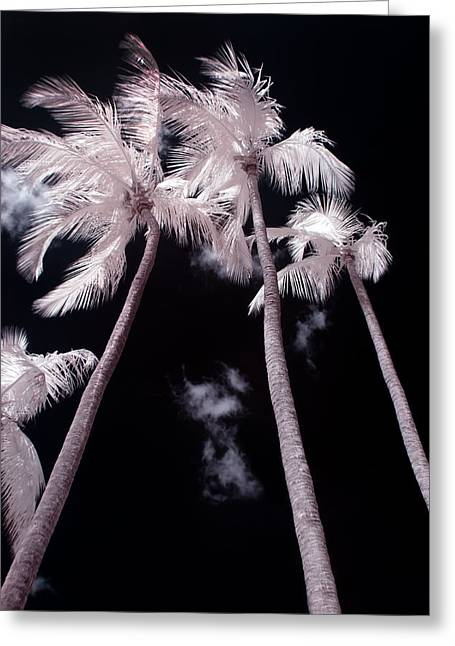 Nature Study Digital Greeting Cards - Infrared Palm Trees Greeting Card by Adam Romanowicz