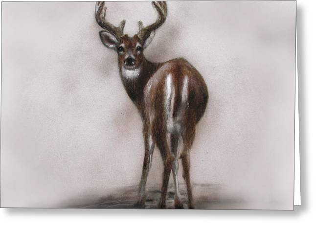 Jackie Flaten Greeting Cards - Innocent Beauty Greeting Card by Jackie Flaten