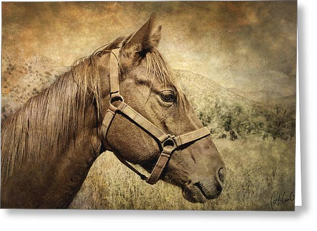 Equine Photo Greeting Cards - Inquisitive Greeting Card by Christine Hauber
