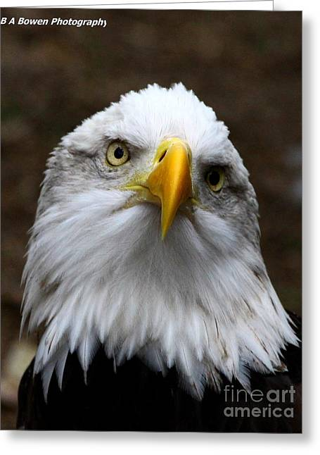 Birdwatching. B A Bowen Photography Greeting Cards - Inquisitive Eagle Greeting Card by Barbara Bowen