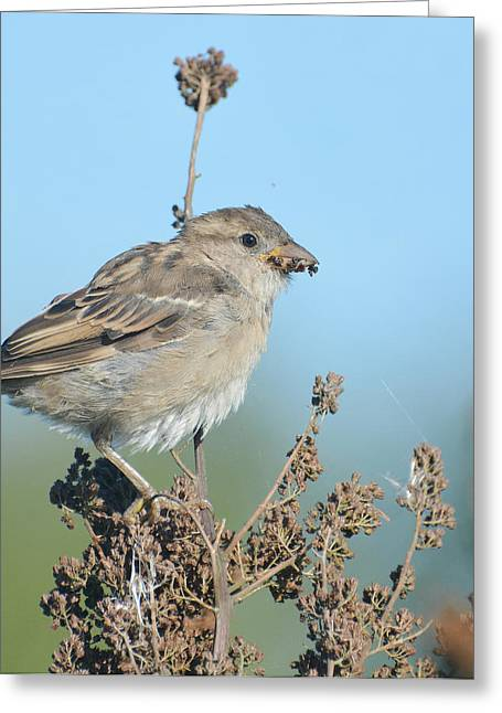 Sparrow Greeting Cards - Insatiable Greeting Card by Fraida Gutovich