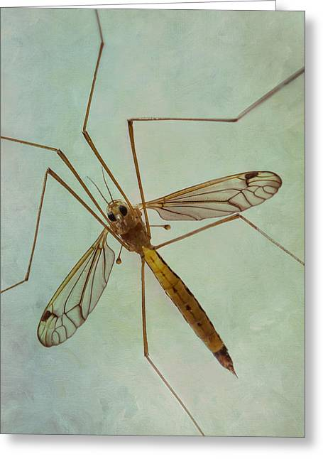 Office Space Greeting Cards - Insect Abstract - Crane Fly Greeting Card by Patti Deters