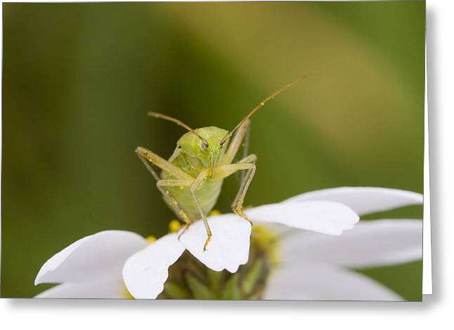 Insect Greeting Card by Andre Goncalves
