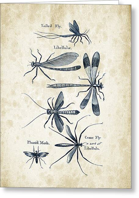 Beetle Greeting Cards - Insects - 1792 - 11 Greeting Card by Aged Pixel