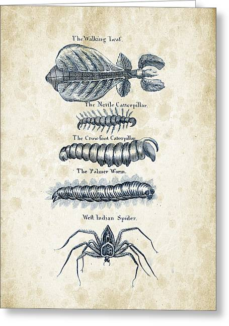 Spider Greeting Cards - Insects - 1792 - 17 Greeting Card by Aged Pixel