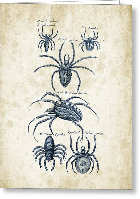Spider Greeting Cards - Insects - 1792 - 18 Greeting Card by Aged Pixel