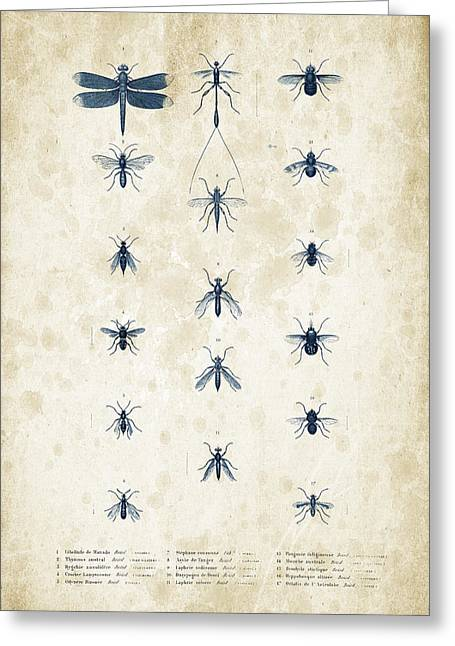 Beetle Greeting Cards - Insects - 1832 - 12 Greeting Card by Aged Pixel