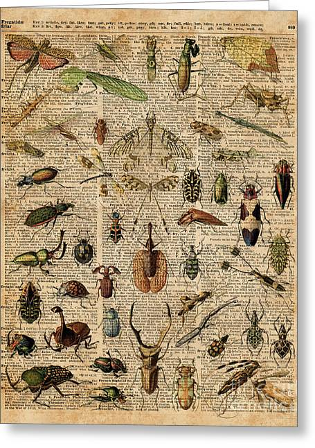 Insects Bugs Flies Vintage Illustration Dictionary Art Greeting Card by Jacob Kuch