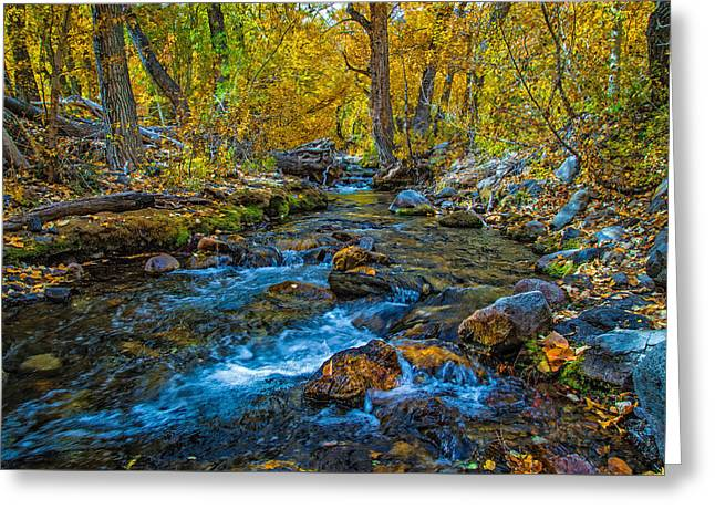 Reflection In Water Greeting Cards - Inside McGee Creeks Fall Canopy Greeting Card by Lynn Bauer