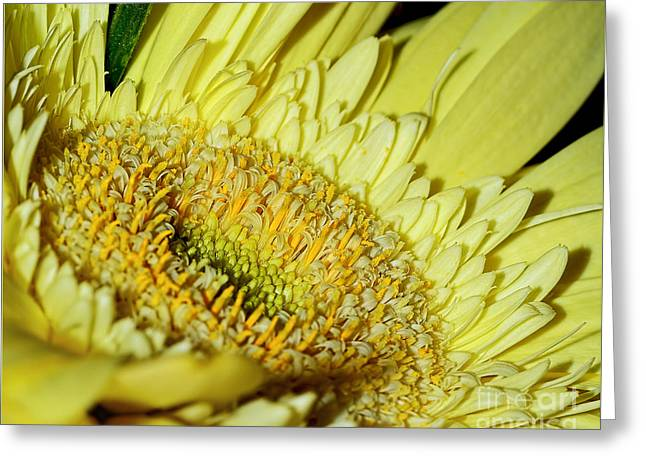 Inside Nature By Kaye Menner Greeting Card by Kaye Menner