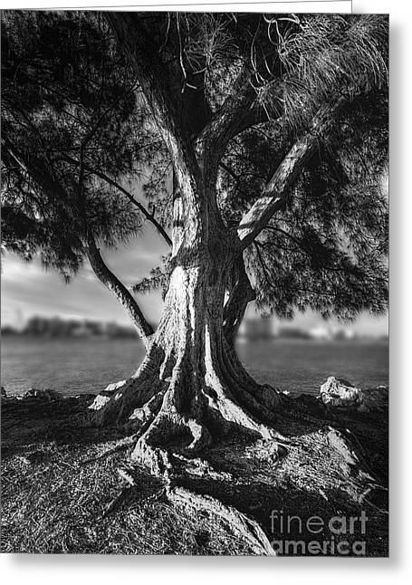 Jacksonville Greeting Cards - Intercoastal Pine Greeting Card by Marvin Spates