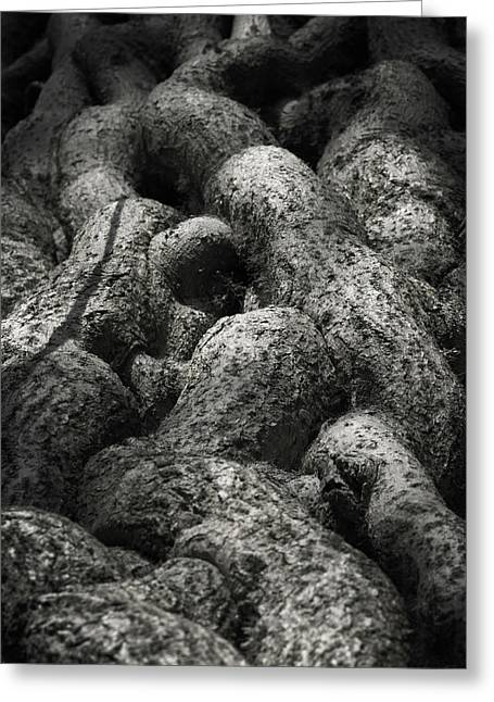 Tree Roots Greeting Cards - Intertwined Greeting Card by Wim Lanclus
