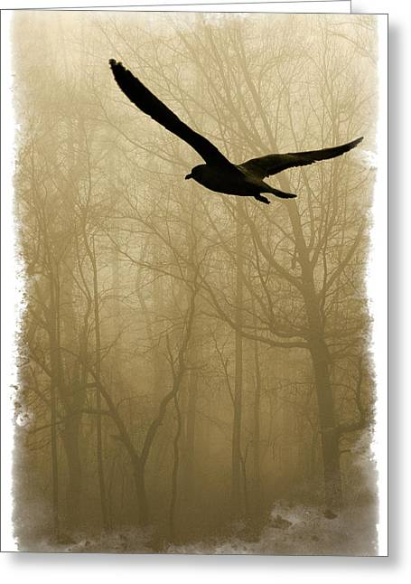 Flying Bird Greeting Cards - Into the Fog Greeting Card by Harry Spitz