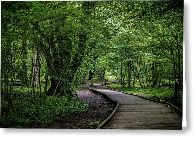 Into The Forest Greeting Card by Martin Newman