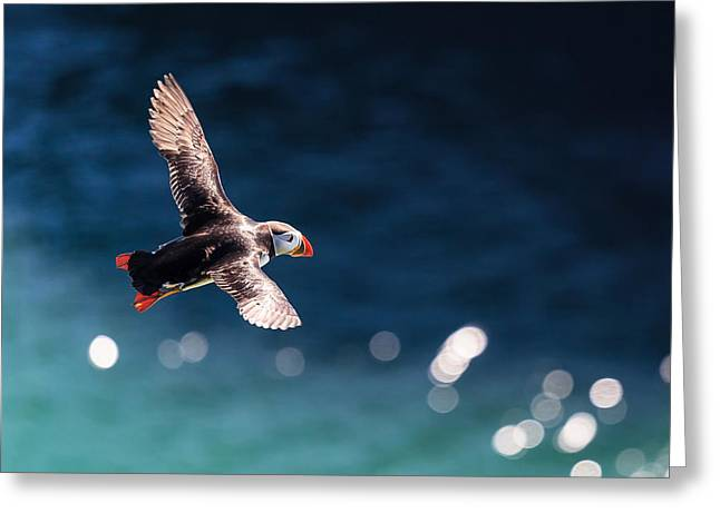 Atlantic Puffin Greeting Cards - Into The Light Greeting Card by Ingi T. Bjornsson