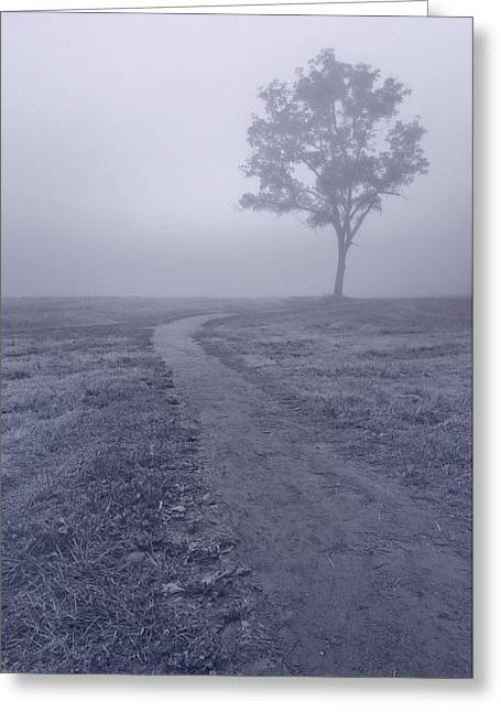 Fog Mist Greeting Cards - Into The Mist BW Greeting Card by Steve Gadomski