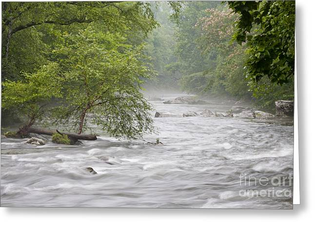 Tennessee River Greeting Cards - Into the Mist Greeting Card by Finesse Fine Art