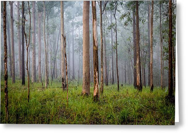 Canon 6d Digital Art Greeting Cards - Into The Mist Greeting Card by Keith Hawley