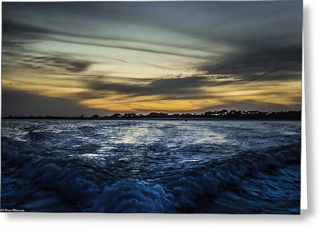 Unset Greeting Cards - Into The Night  Greeting Card by Debra Forand