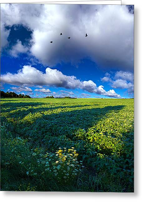 Red Photographs Greeting Cards - Into the Open Greeting Card by Phil Koch