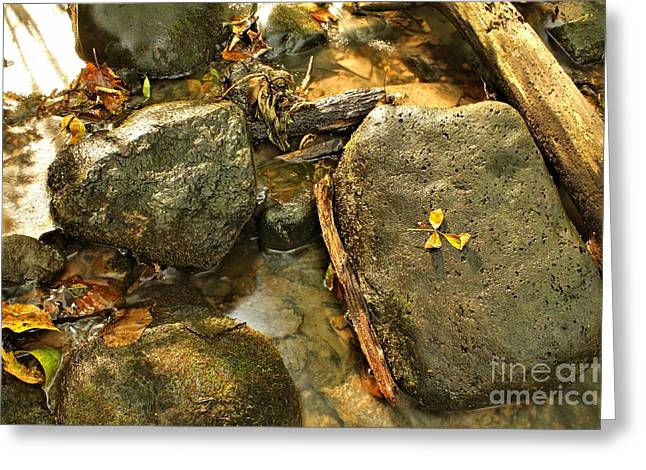 Creek Framed Prints Greeting Cards - Into The Stream 13  Greeting Card by Jimmy Ostgard