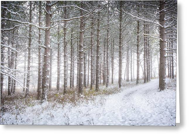 Into The Woods 3 - Winter At Retzer Nature Center  Greeting Card by Jennifer Rondinelli Reilly - Fine Art Photography