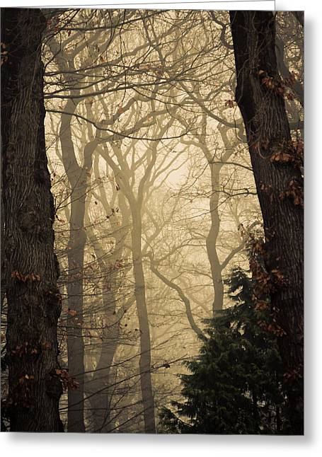 Civil Greeting Cards - Into the woods Greeting Card by Alexander Ipfelkofer