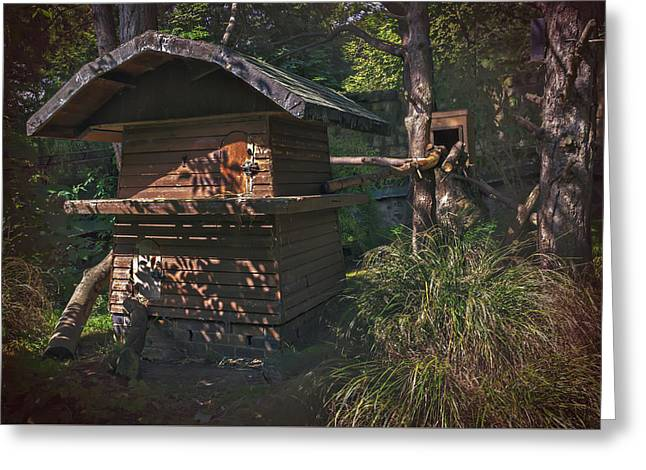 Log Cabins Greeting Cards - Into The Woods Greeting Card by Carol Japp