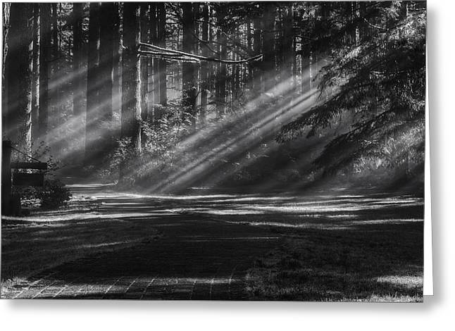 Into The Woods Greeting Card by Mark Kiver