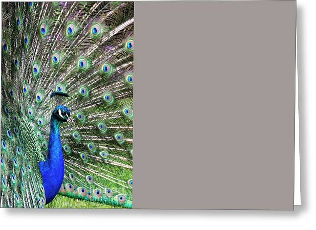 Peafowl Greeting Cards - Iridescent eyes Greeting Card by Tim Gainey