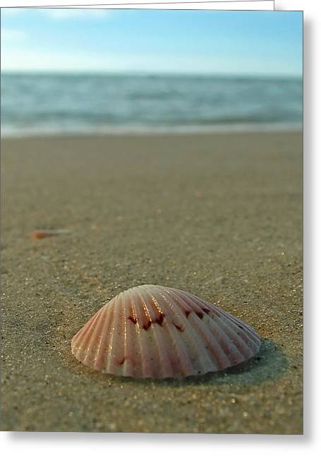 Iridescent Seashell Greeting Card by Juergen Roth