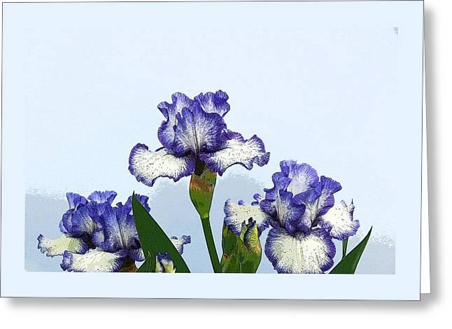 Iris 15 Greeting Card by Allen Beatty