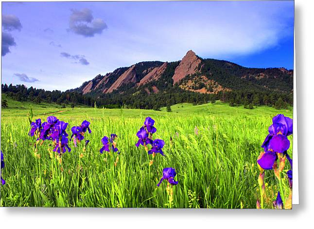 Iris and Flatirons Greeting Card by Scott Mahon
