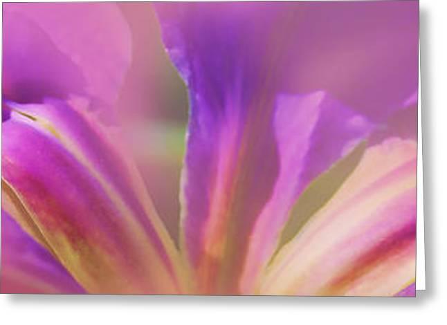 Judi Bagwell Greeting Cards - Iris Panorama Greeting Card by Judi Bagwell