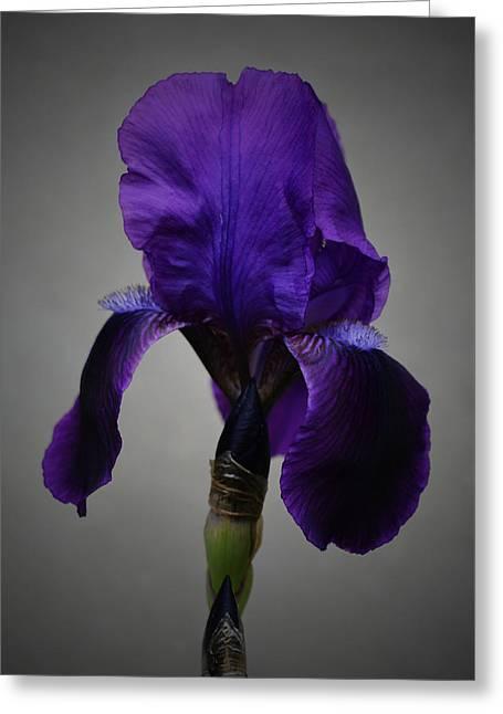 Floral Digital Art Digital Art Greeting Cards - Iris Greeting Card by Richard Andrews