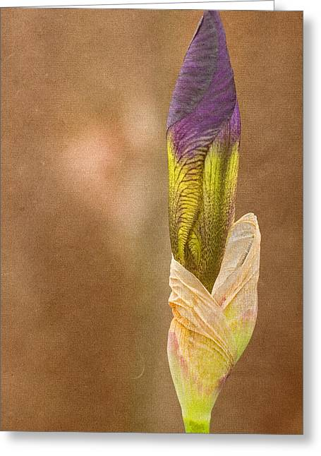 Floral Photographs Greeting Cards - Iris Study Greeting Card by Bonnie Bruno