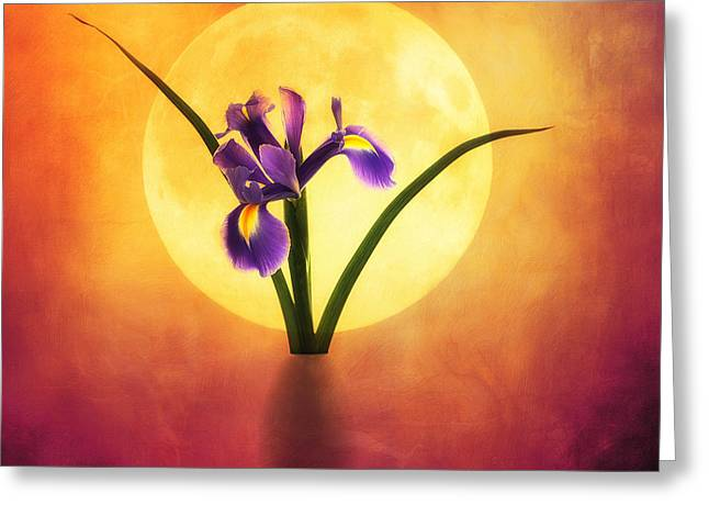 Sunset Abstract Photographs Greeting Cards - Iris Greeting Card by SK Pfphotography